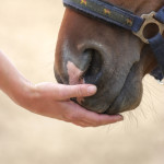 Connecting with your horse using Reiki